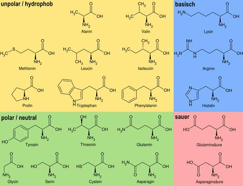 Aminosäure K